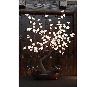 The Light Garden Lighted Bo...